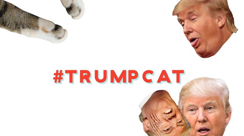 Trump Hates Kittens?